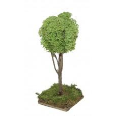 Baum mit Islandmoos